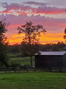 sunset on evergreen lavender farm
